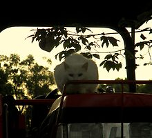 Ghost Cat by jessicacbarker