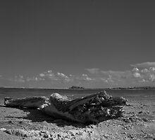 The Abandoned Log by Rafiul Alam