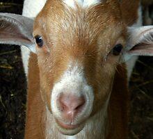 I'm a Goat! by jessicacbarker