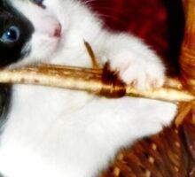 Kitten in a Basket Sticker
