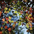 Up Adirondack by Kirstyshots