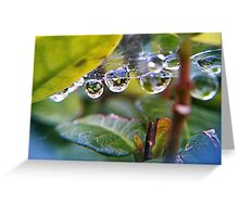 Spider-web  Greeting Card