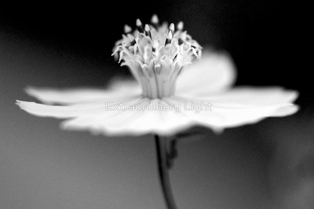 Prima Ballerina by Renee Hubbard Fine Art Photography