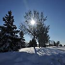 After the Snow 3 by Graham Taylor