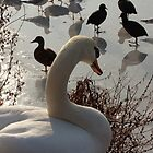 winter swan by Jicha