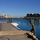 Fremantle. Fisherman by Tony Brown