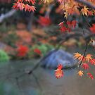 Japan - Autumn 3 by Glenn Browning