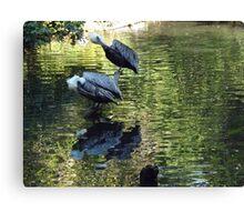 Exotic Bird and Reflection, Bronx Zoo, Bronx New York Canvas Print