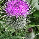 Thistle do.. by Elaine Game