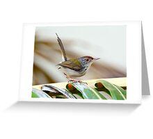 Common Tailor Bird [Orthotmus sutorius] Greeting Card