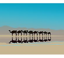 Black camels silhouette in desert Photographic Print