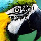 Tropical Bird - Colorful Macaw by Sharon Cummings