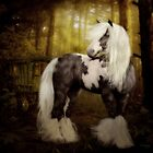 Gypsy Gold - Gypsy Vanner horse by Shanina Conway