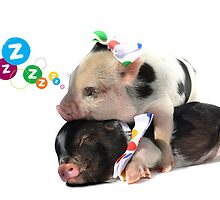2 MICRO PIGS CUDDLING by petpiggies