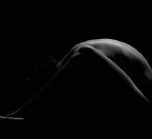Back Light by Frankie Pereira