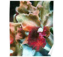 Cezzane Orchids ... no border Poster