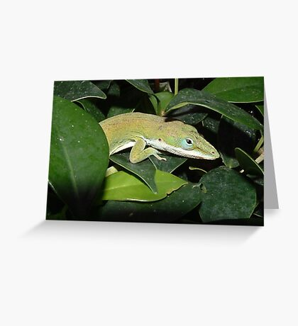Anole Lizard Greeting Card