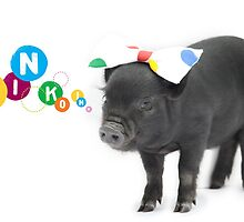 Pretty black female micro pig with bow by petpiggies