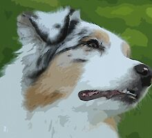 Australian shepherd pretty dog breed by Adam Asar