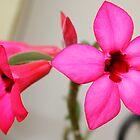 Twin Pink Tropical Floras  by Yajhayra Maria