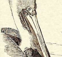 Pelican's best profile ink by Anne Guimond