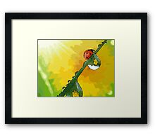 Beautiful ladybug Framed Print