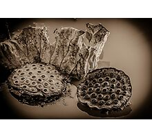 Floating Lotus Seed Pods1 Photographic Print