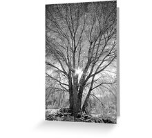 Winter Spread Greeting Card