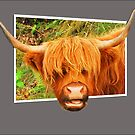 The Highland Cow by Anthony Hedger Photography