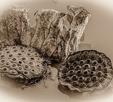 Floating Lotus Seed Pods  by Mary Carol Story