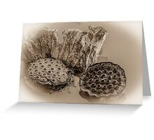 Floating Lotus Seed Pods  Greeting Card