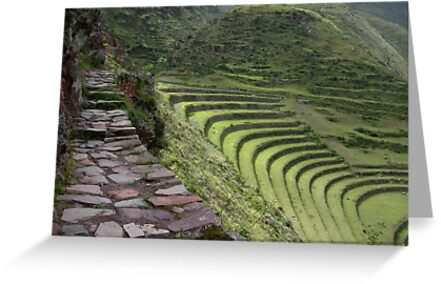 Path to an Andean  Wonder by Alessandro Pinto