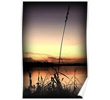 Reeds after sunset Poster