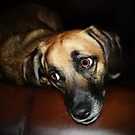 Puppy Eyes by Ticker