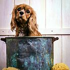 Cavalier King Charles Spaniel Bathtime by Edward Fielding