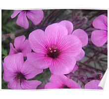 Mauve Flowers Poster