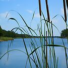 Cattail On The Lake iPad Case by ipadjohn