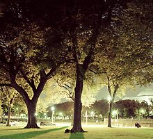 Tree on the National Mall by pr0digal
