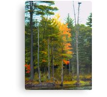 NH Foliage in low key Metal Print