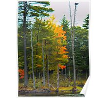 NH Foliage in low key Poster