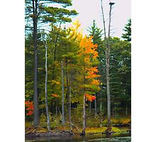 NH Foliage in low key Photographic Print