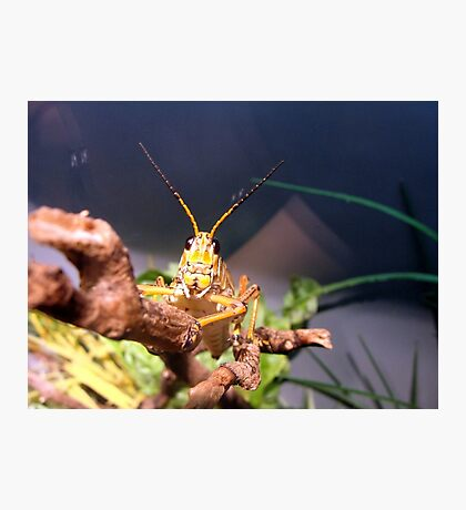 Bug Eyed Photographic Print