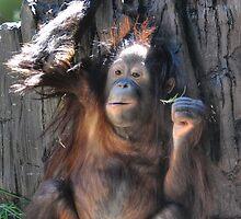 Baby Orangutan by Savannah Gibbs