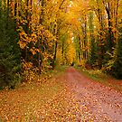 Yellow Fall Drive iPad Case by ipadjohn