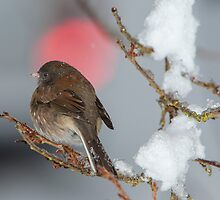 Sparrow in the Snow by Jim Stiles