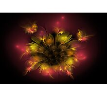 Wildflower in Yellow and Red Photographic Print