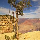Tough Tree On The Rim iPad Case by ipadjohn