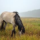 Horse in the mist by Alexey Yakuban