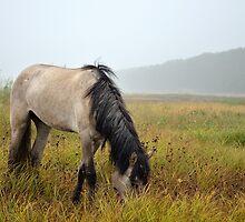 Horse in the mist by Lex Aku