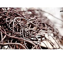 Rusty Wires  Photographic Print